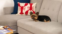 Sofa in a living room with a cute little dog